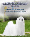 Exposiciones Caninas de Asturias 2015