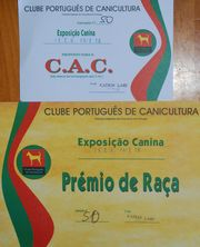 Calificaciones de Jira Da Volvoreta