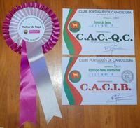 Calificaciones de Jira Da Volvoreta en la 71 Exposición Canina Internacional do Norte