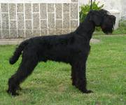 You're for Volvoreta Grand Calvera con casi 9 meses de edad