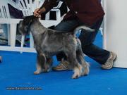 Yes To Volvoreta Grand Calvera fue reserva de CAC en la monográfica del CES 2011