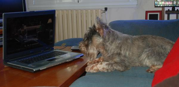 Erte Da Volvoreta viendo The Big Bang Theory.